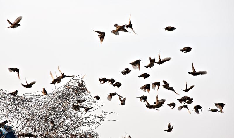 ravens_web